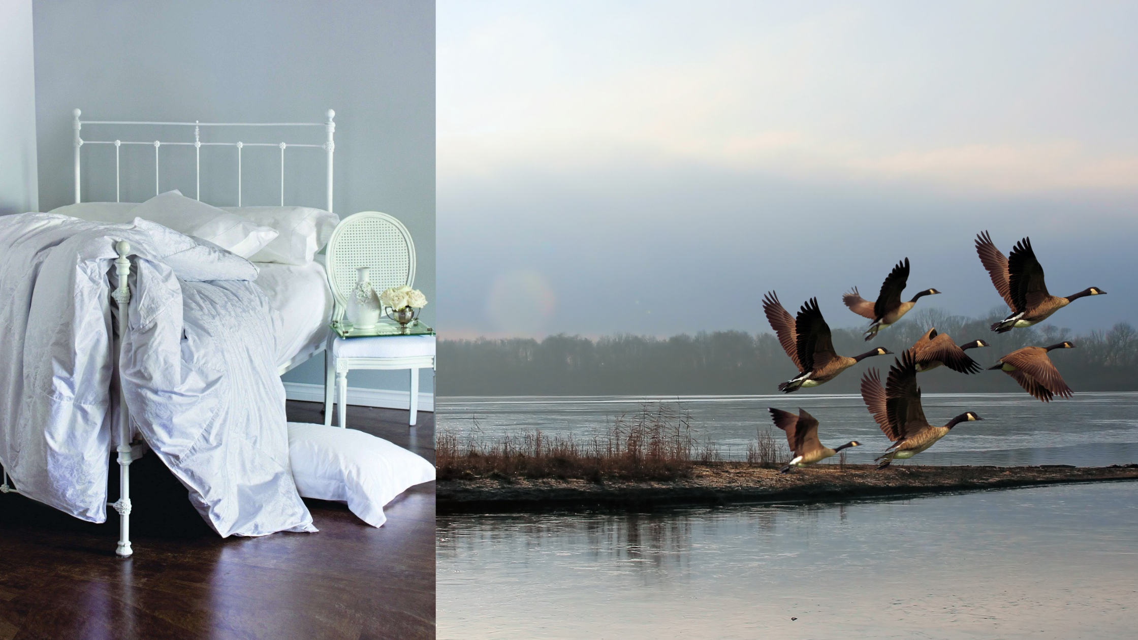 James Bay wild goose down duvet and wild geese
