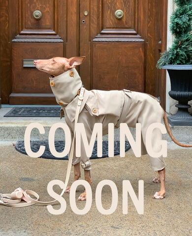 coming soon - the rain suit