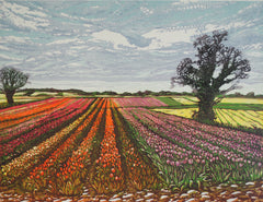 Tulip Fields In Norfolk