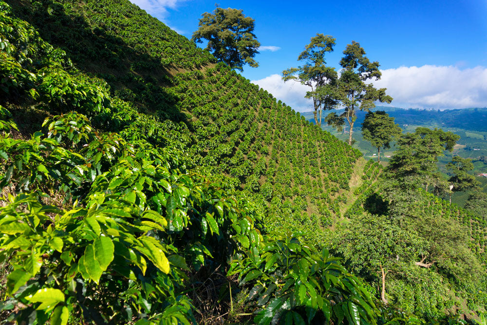 Coffees from Colombia