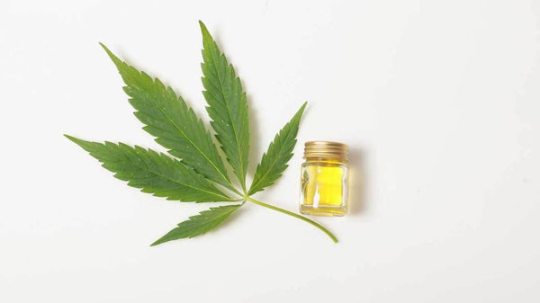 The Manual: What is CBD? A Brief Introduction to the Benefits of Cannabidiol