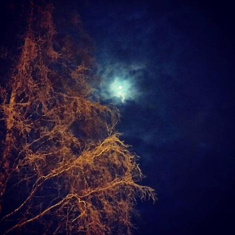 moon light in the winter