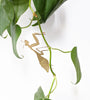 Etched in metal, the praying Mantis simply attaches to your plants by folding the hands into shape. There are plenty of cute creatures to choose from, why not click to view the entire collection at Eclectic Hound.