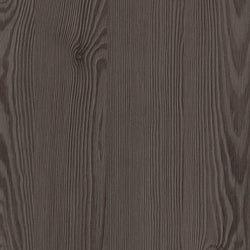 Anthracite Mountain Larch