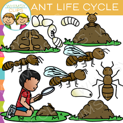 Ant Life Cycle Clip Art