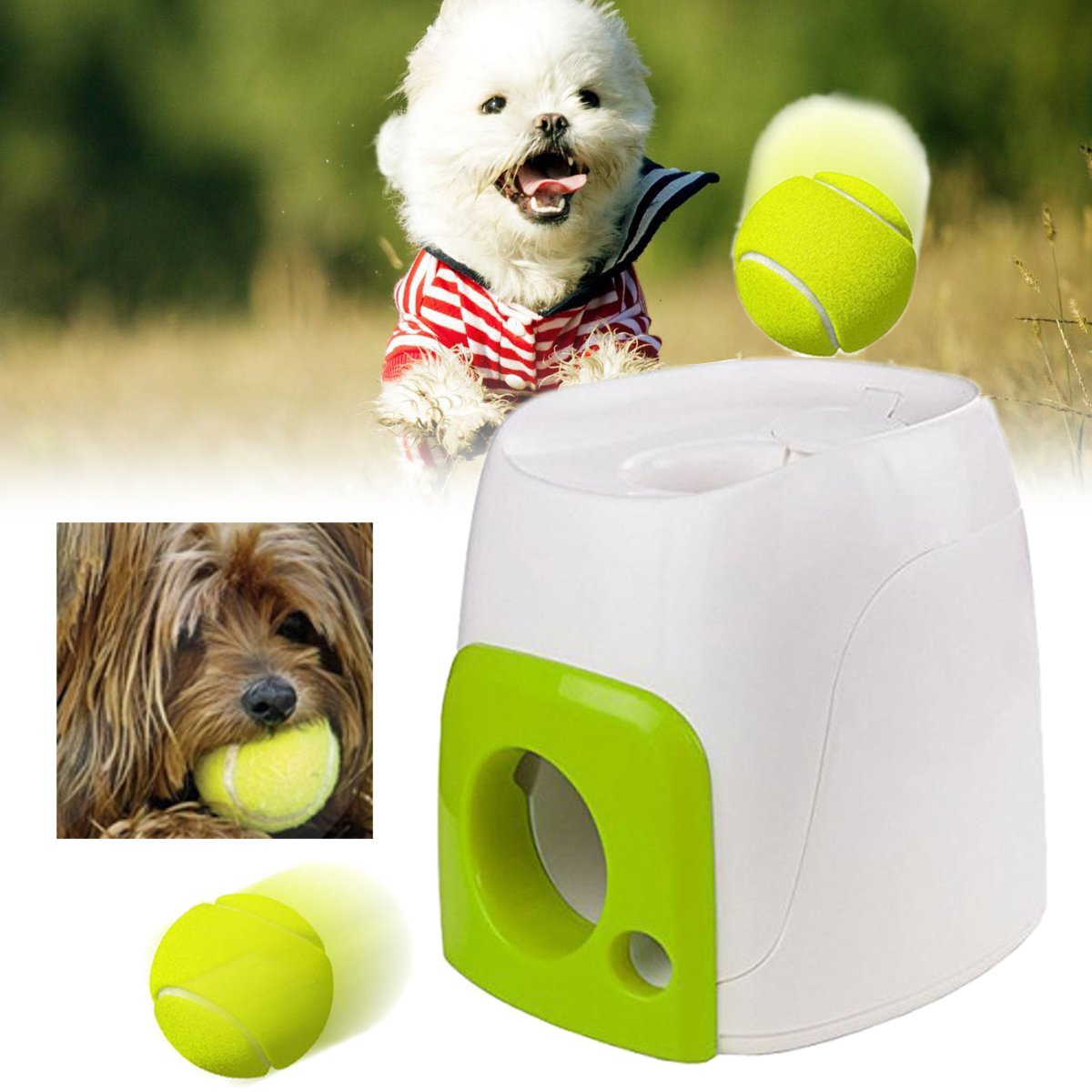 Interactive Fetch & Treat Dog Toys