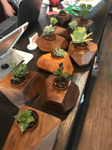 Wood Succulent Holder - Delight In Designs