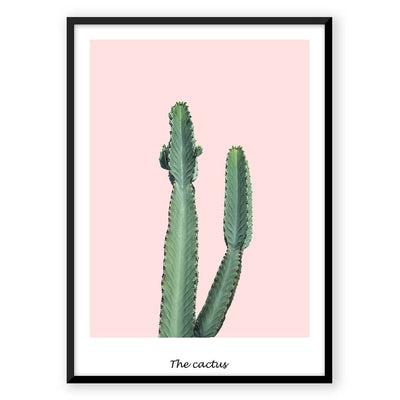 Pink Cactus - Nordic Peace