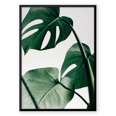 Tropical Monstera - Nordic Peace