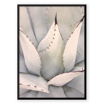 Agave - Nordic Peace