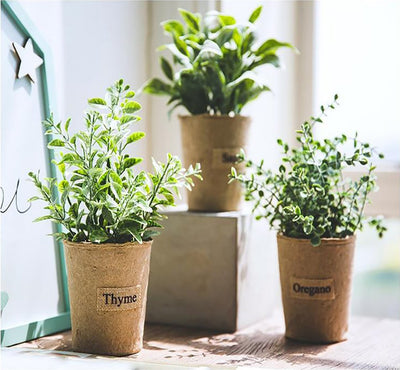 Decorative Plant Refreshers - Nordic Peace