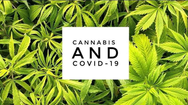 CBD Oil and a Potential Role in the Coronavirus Fight