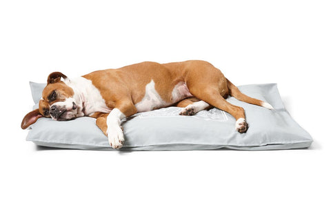 Dog Futons