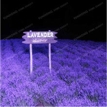 Load image into Gallery viewer, French Provence Lavender Bonsai