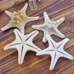 1pcs Starfish Miniature Figurine Home Decoration Accessories Craft Ornaments Sea Stars DIY Beach Cottage Gifts 5-10cm