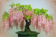 Load image into Gallery viewer, 10pcs Rare well Mini Bonsai