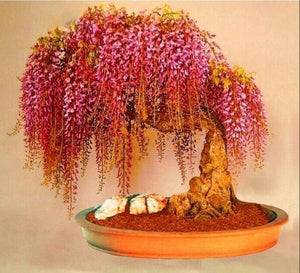 10pcs Rare well Mini Bonsai