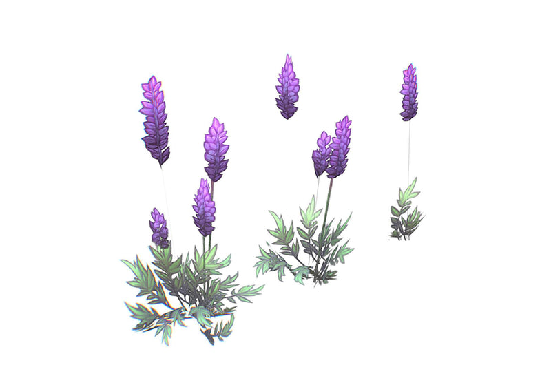 Wheat Poppy Lavender Flowers - Hand Painted Texture Pack 22