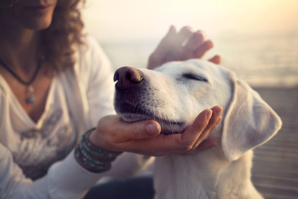 How To Manage Your Grief After The Loss Of A Pet