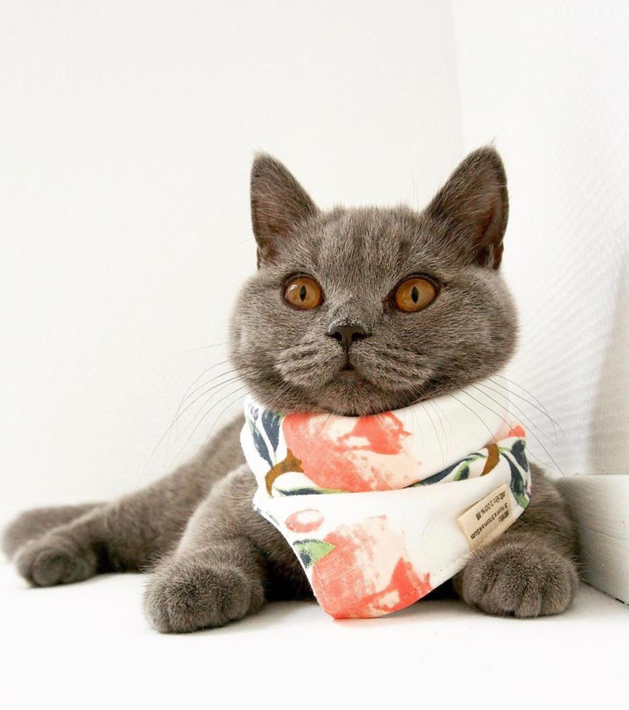 Pretty Pet Scarf
