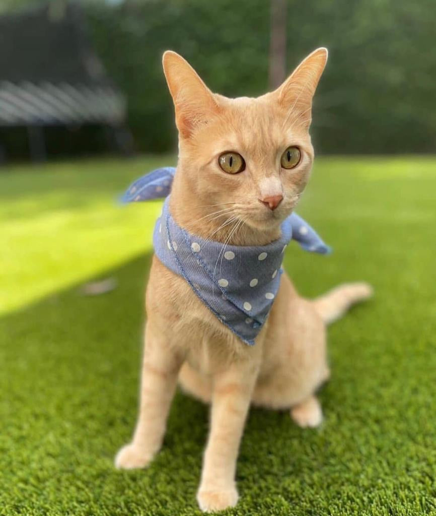 Fashionista Pet Bandana