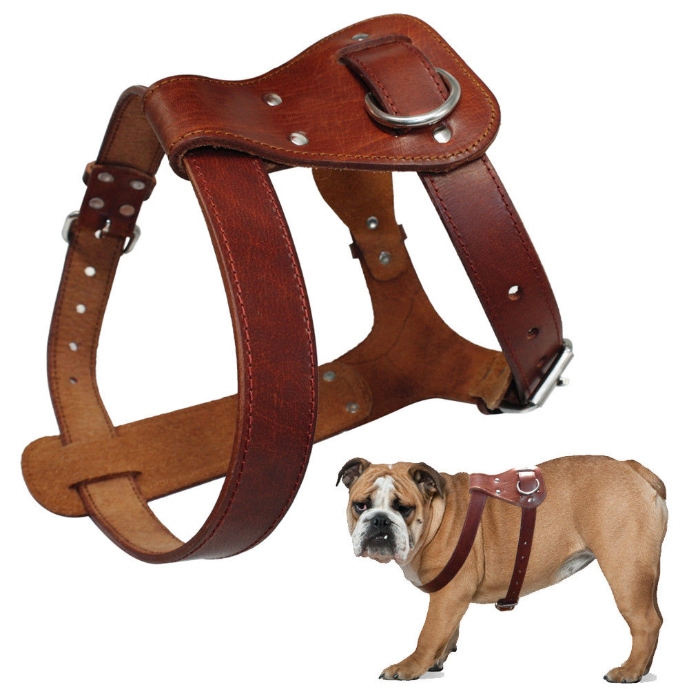 Genuine Lifetime Harness