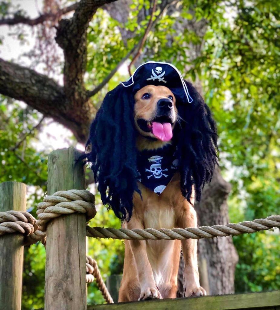 Pirate Hat For Your Furry Mate