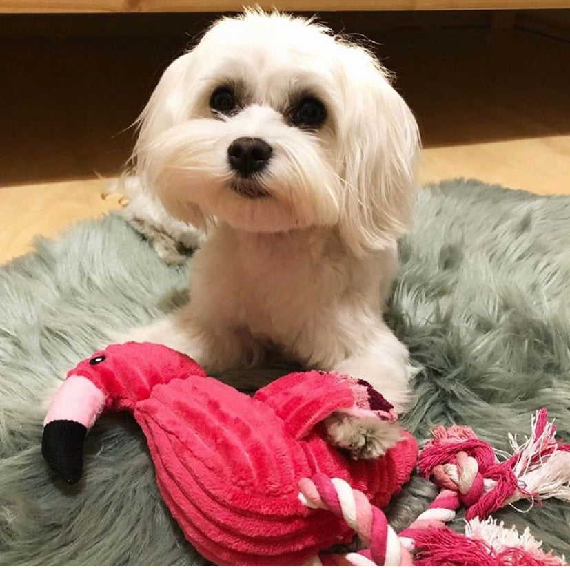 Durable Flamingo Toy