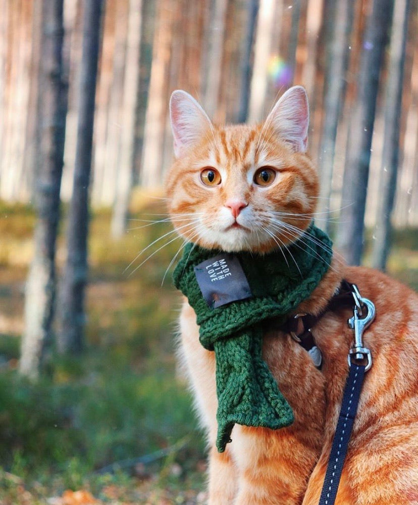 Winter Scarf