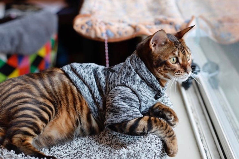 The Kitty Sweater