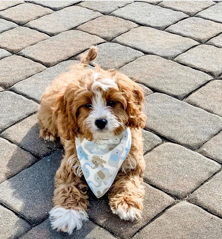 Cutest Bandana