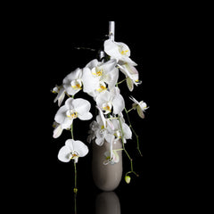 Porcelain Flowers & Phalaenopsis Orchids