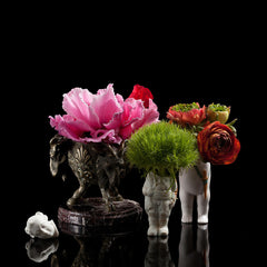 Cyclamen Stems, Green Trixx & Ranunculus