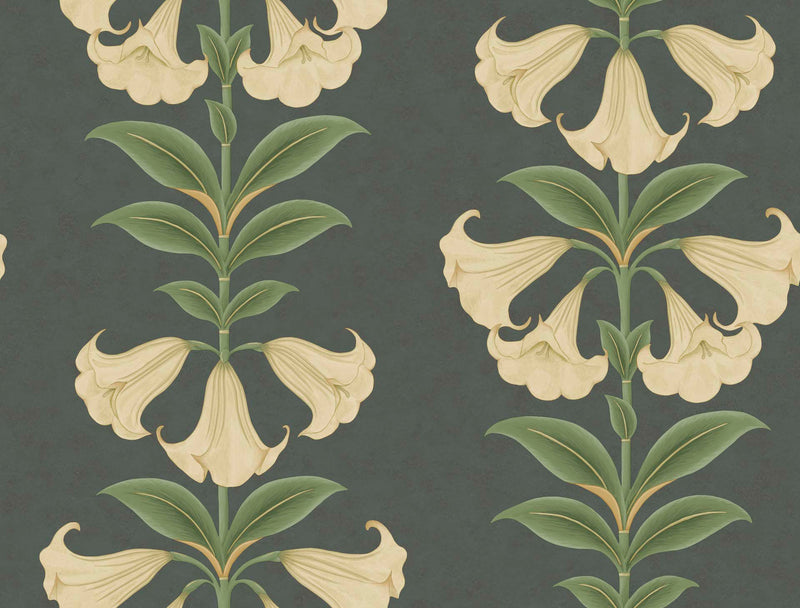Cole & Son - Seville Collection - Angel's Trumpet 117/3006 Cream & Olive Green on Charcoal