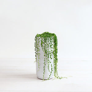 String of Pearls Planter