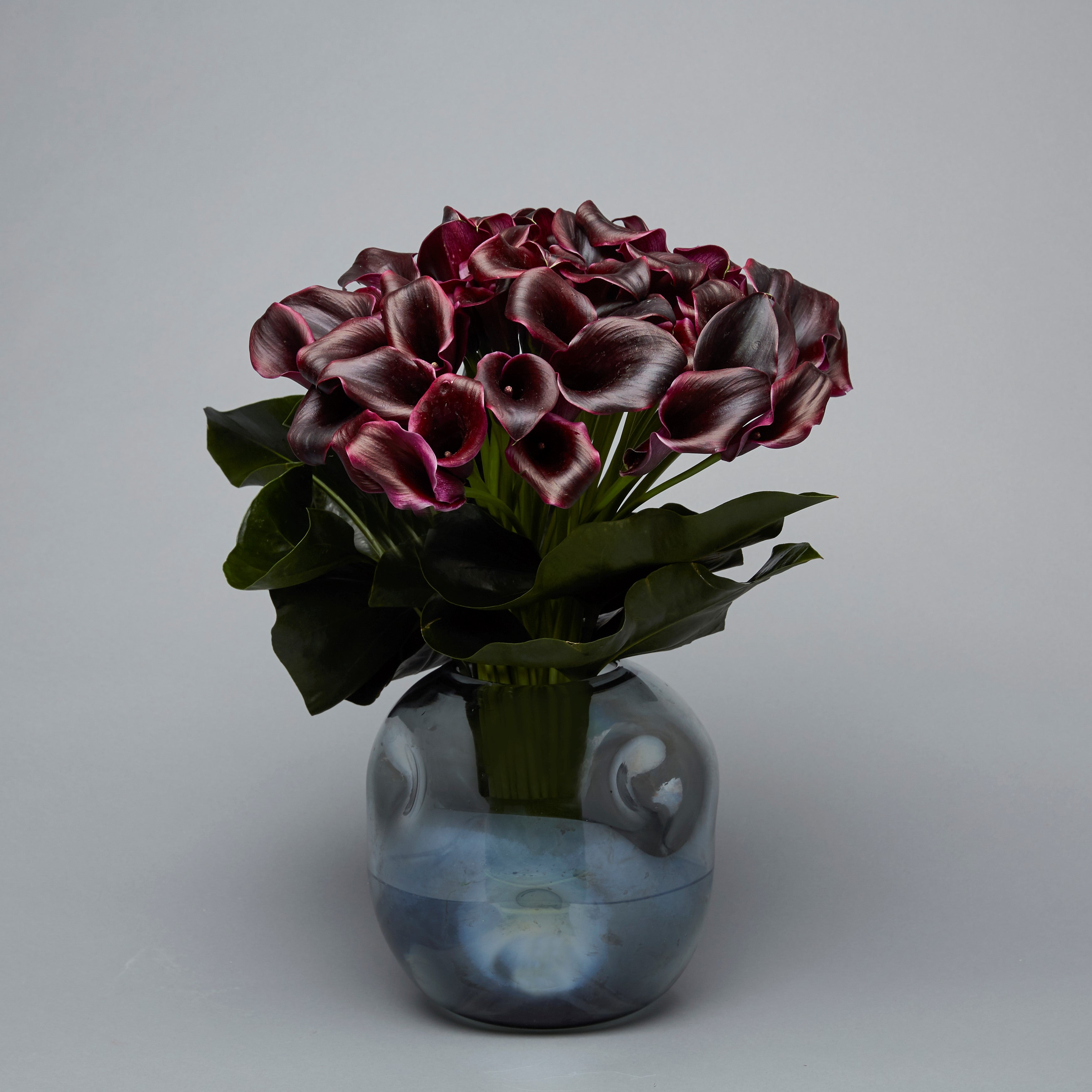 Black Calla in Smokey Vase