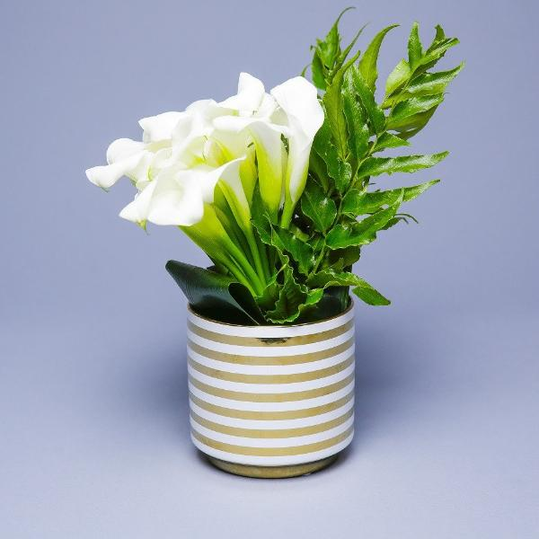 White Callas in Gold Stripe vase