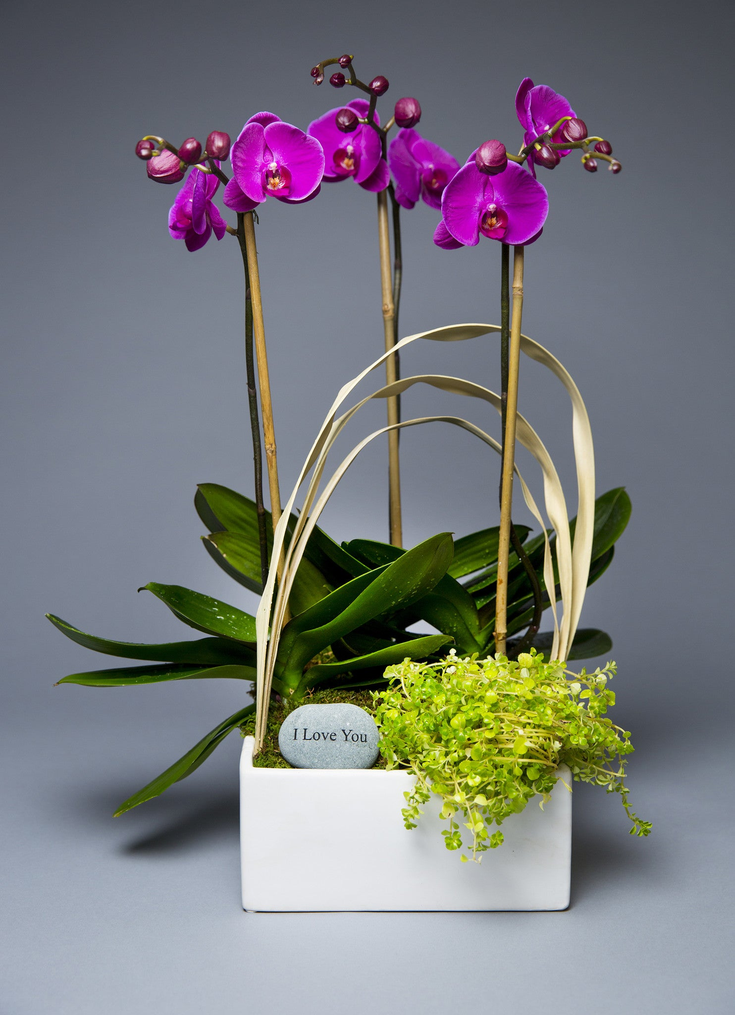 Triple Stem Sweet heart orchid