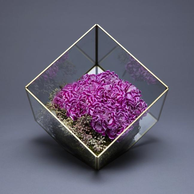 Glass Cube Dianthus