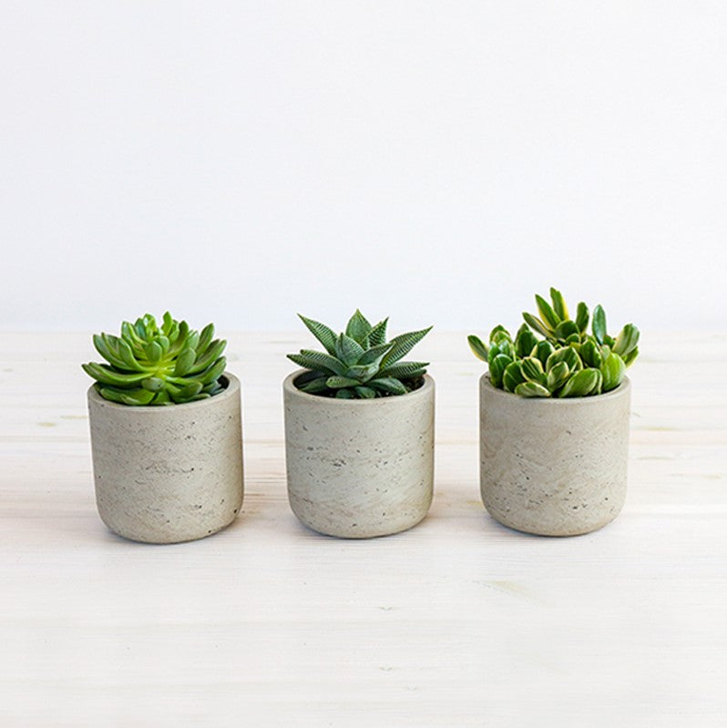 Natural Succulent Trio