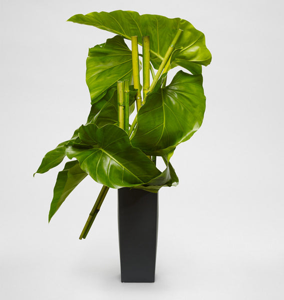 Philodendron Sculpture