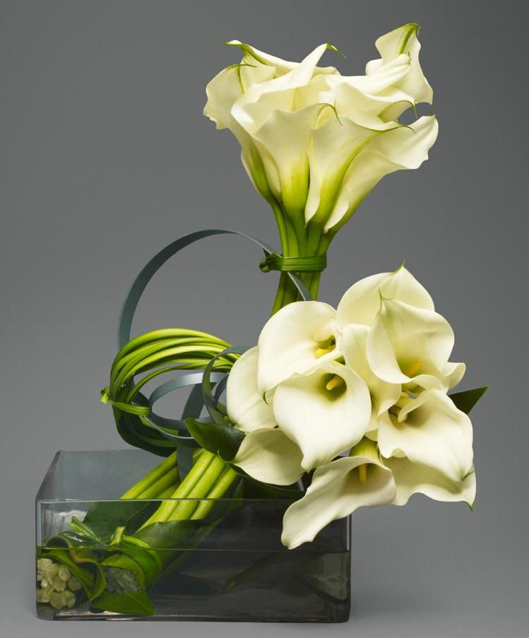 Sculpted White Callas