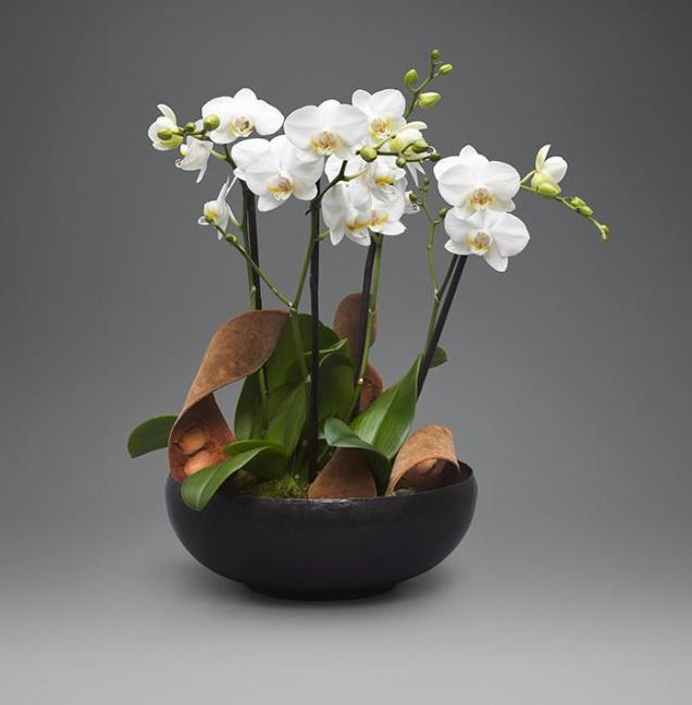 White Mini Orchid Garden