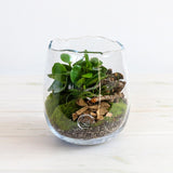 Terrarium in Gommaire Glass