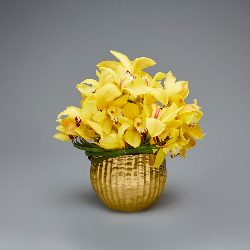 Gold  Cymbidiums