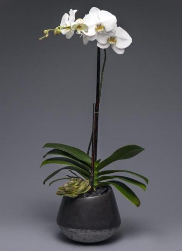 Orchid Garden in Vibe Planter