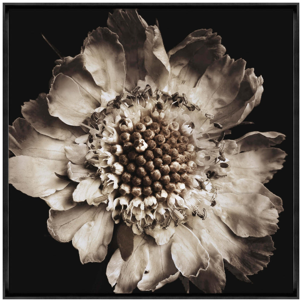 Scabiosa Framed - Accessories Artwork - High Fashion Home