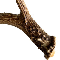 Deer Antler, Medium - Accessories - High Fashion Home