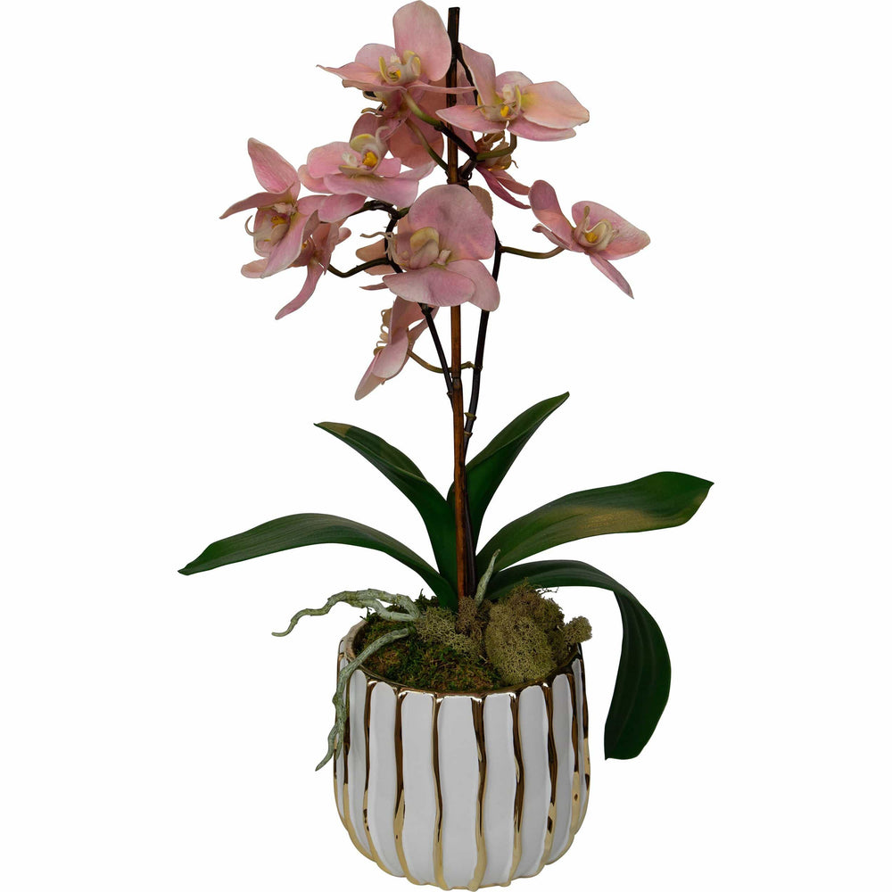 Pink Orchid in Striped Pot - Accessories - High Fashion Home