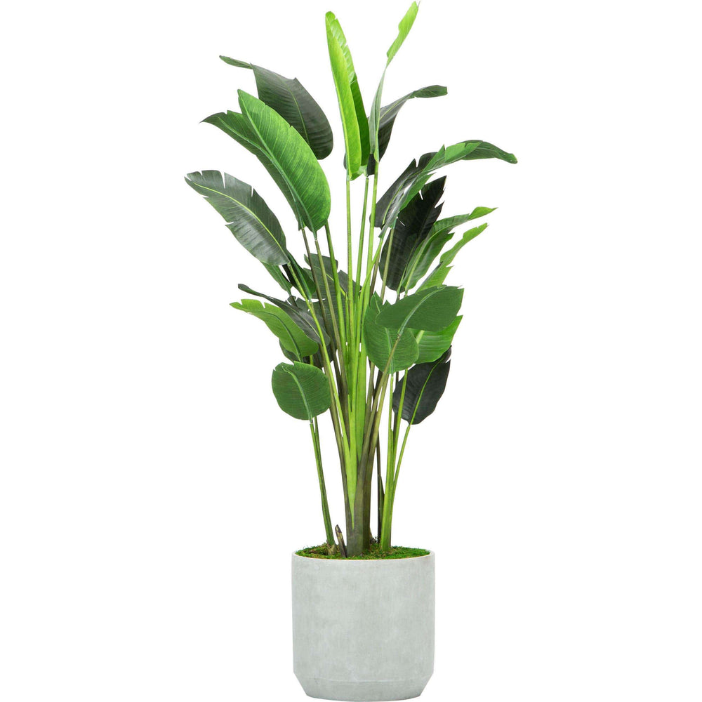 Travelers Palm, Concrete Planter - Accessories - High Fashion Home